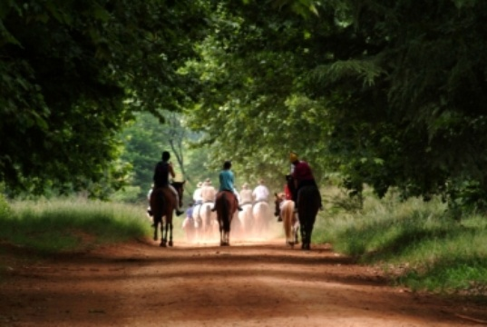 Horse riding in the Midlands